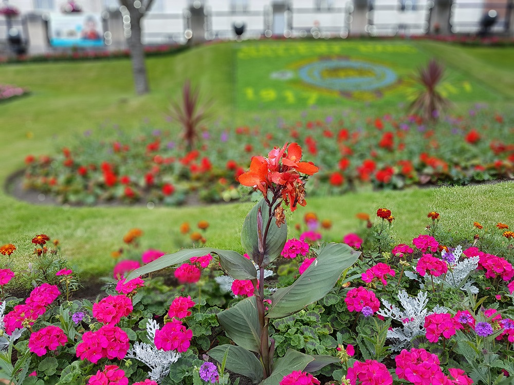 Town hall flower bed Barnsley